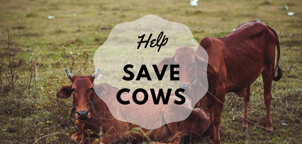 Help Save the Cows